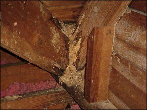 C1diag-diagnostic-termites-St-etienne