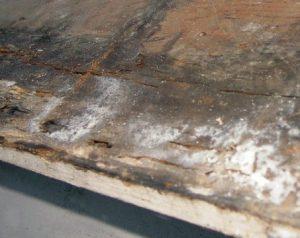 c1diag-diagnostic immobilier-Champignons bois